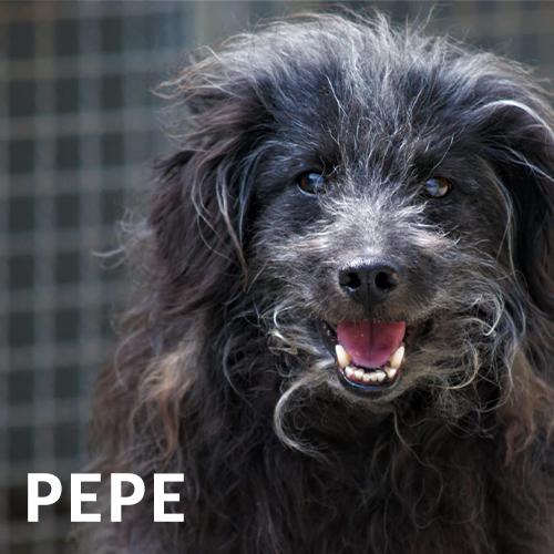 Cane Pepe