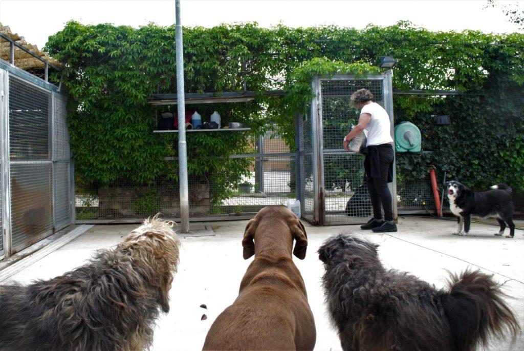 Cani che guardano una volontaria